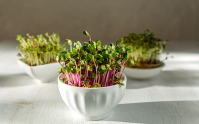 pink-radish-sprouts-white-wooden-background-trendy-hard-light_82780-167